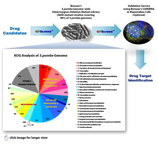 drug discovery approaches to target wnt Drug discovery has always been challenging today, more so than ever while there has been success in addressing many diseases, others remain intractable there is a need and opportunity to explore new drug discovery approaches that harness immense datasets (public and private), which have been.