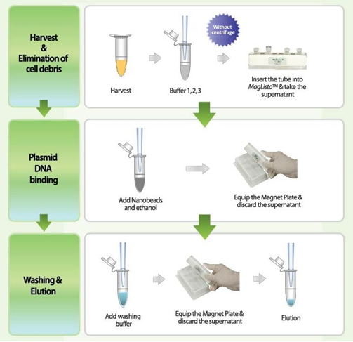 extraction of plasmid dna Plasmid dna minipreps are fundamental techniques in molecular biology current plasmid dna minipreps use alkali and the anionic detergent sds in a three-solution format.
